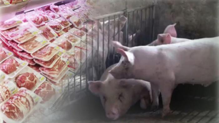 전국 돼지 도축 재개…