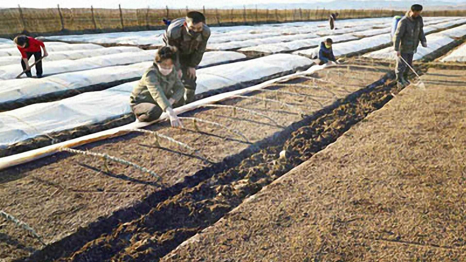 봄 농사철 맞이한 北…코로나에 식량난 심화 가능성