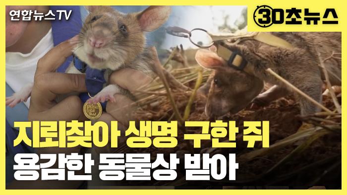 [30초뉴스] 지뢰 찾아 사람 생명 구한 쥐, 용감한 동물상 받아