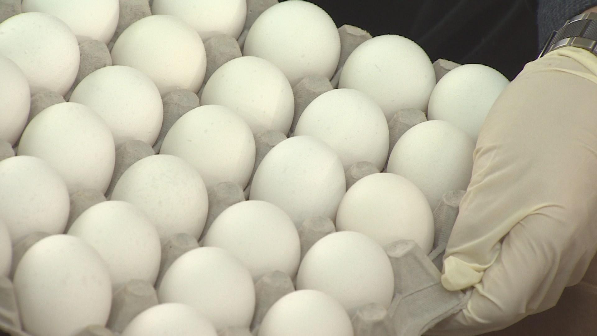 미국산 달걀 60t 수입…공매 입찰 거쳐 판매