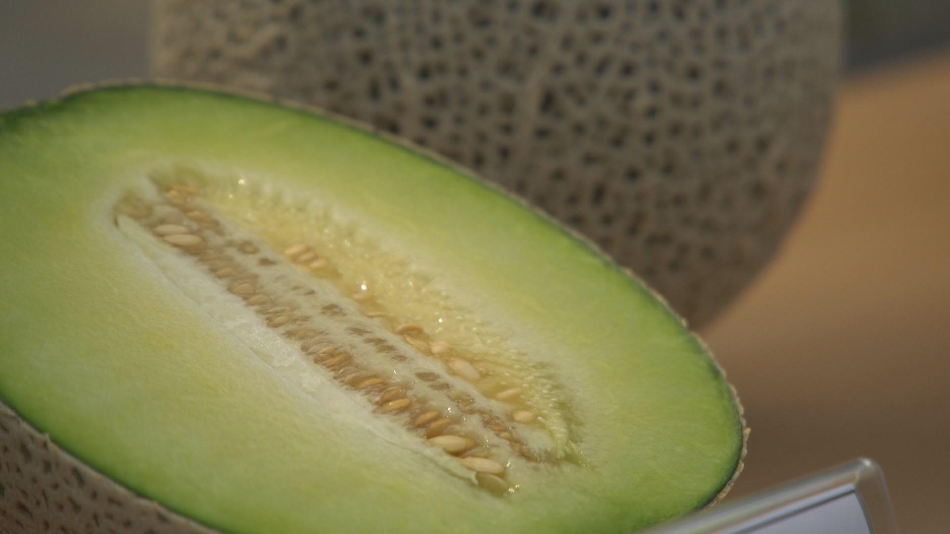 멜론 수경재배 기법 개발…