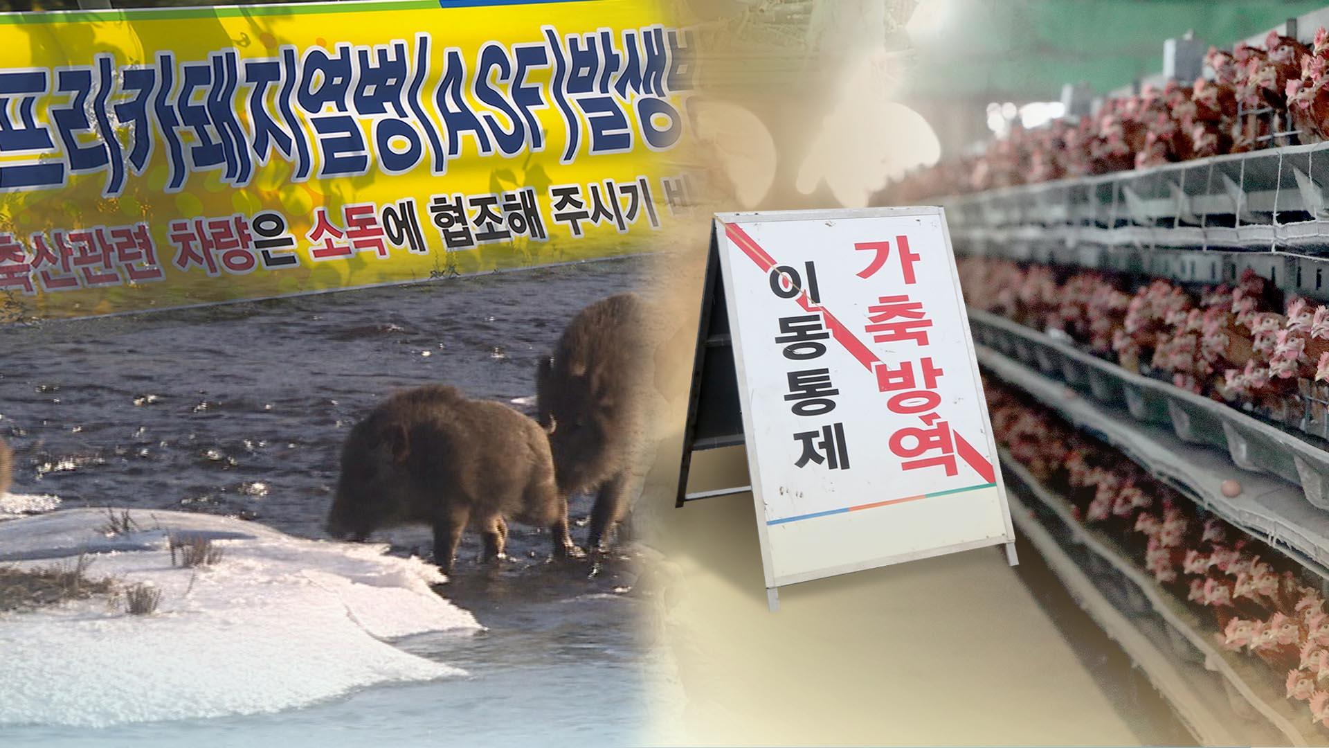돼지열병에 조류독감까지…축산농가 '초긴장'