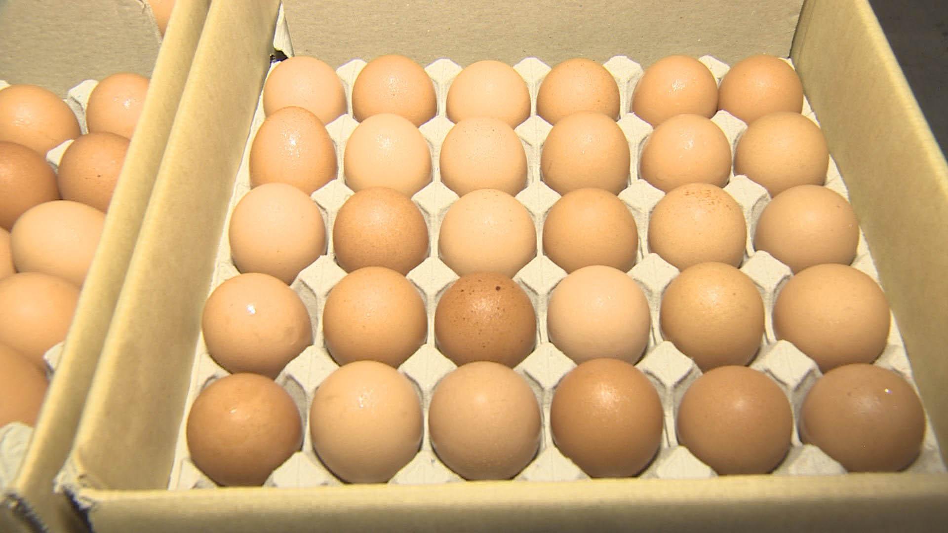 수급 안정 위해 상반기 계란류 5만t 무관세 수입