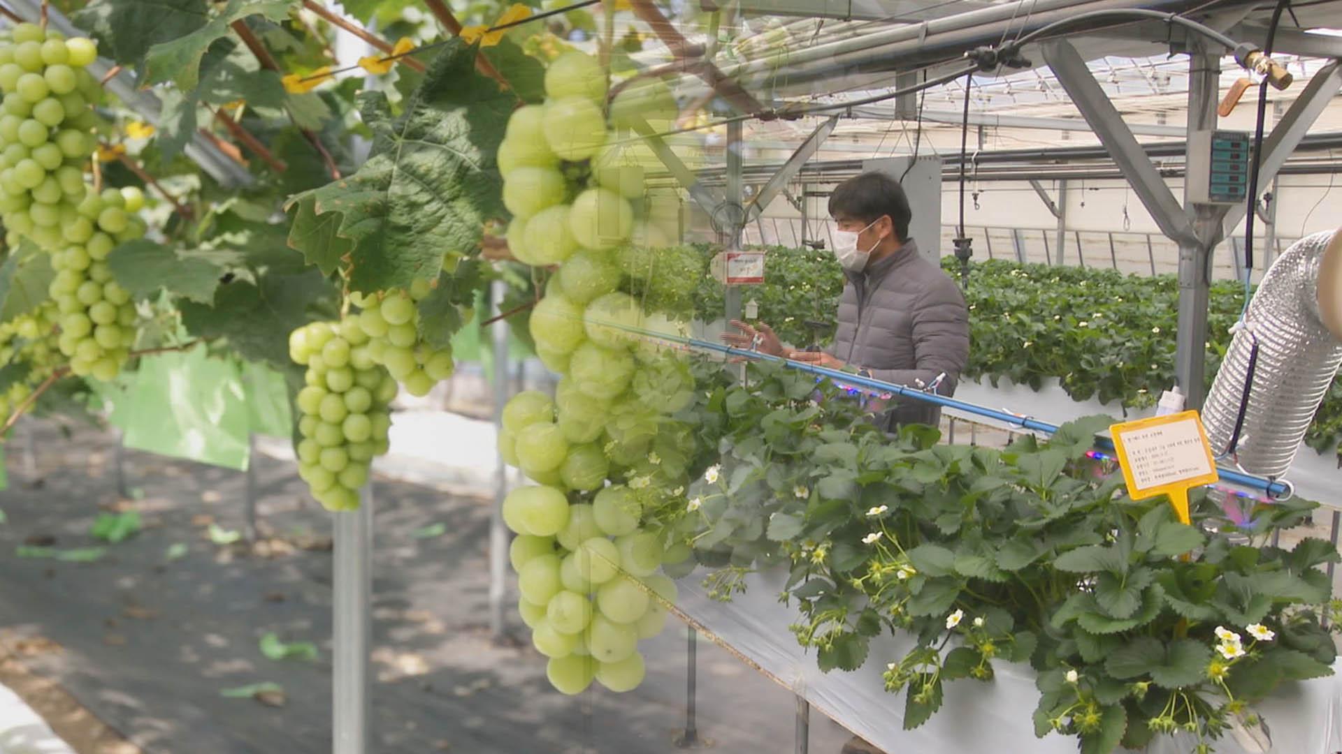 품질·생산성 높이는 스마트팜…농가소득 증대 일등공신