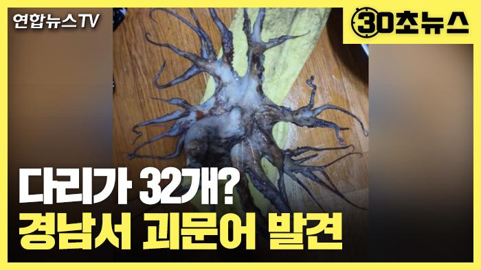 [30초뉴스] 경남 바다서 다리 32개 '괴문어' 발견…어민들