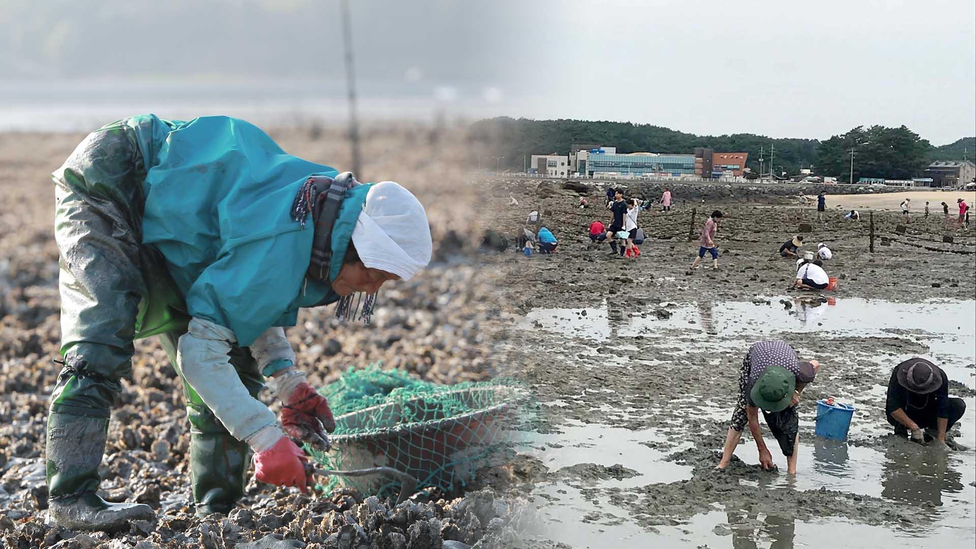 갯마을의 하루는?…'갯벌 어로' 무형문화재 된다